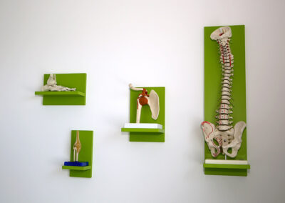 Anatomie-Modelle